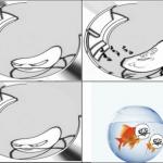 Vue d'un poisson rouge