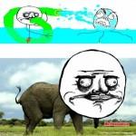 Me elephantsta