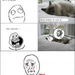Quand je vois mon chat