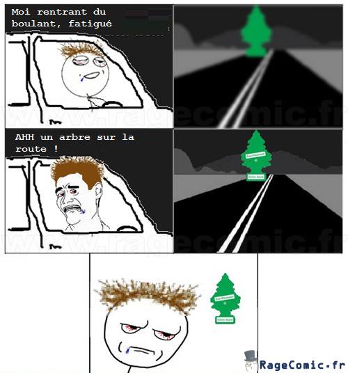 Arbre sur la route