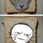 Toastcat