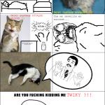 twiky, le troll cat