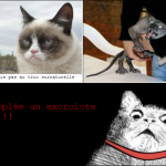le chat qui crois pas...