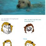 un chien dans la piscine