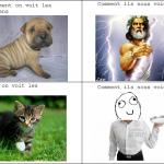 Différence entre chiens et chats