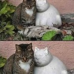 Forever alone cat
