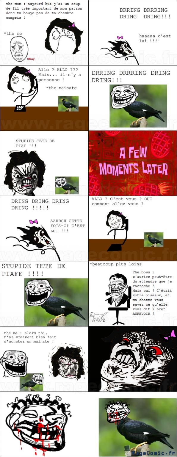 Trollé par un piaf 2