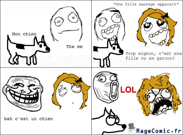 Une histoire de chien...